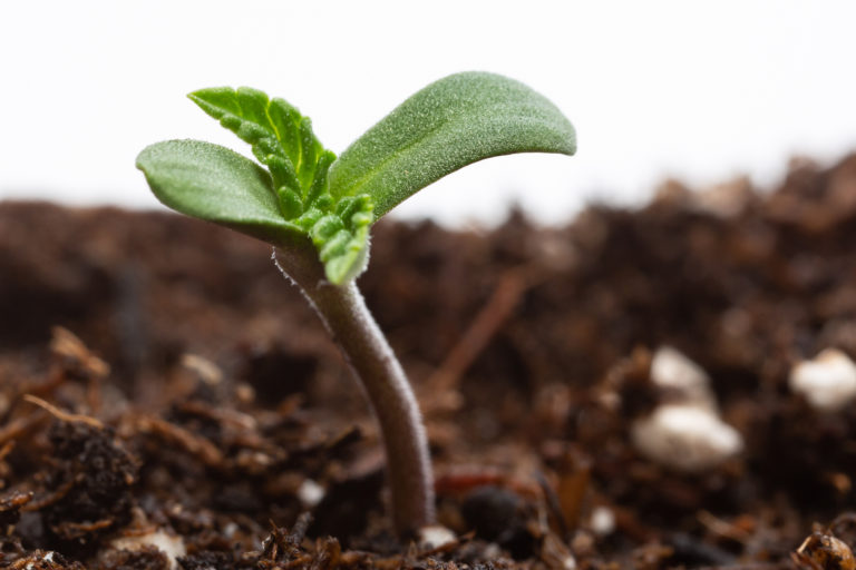How to make super soil for growing cannabis