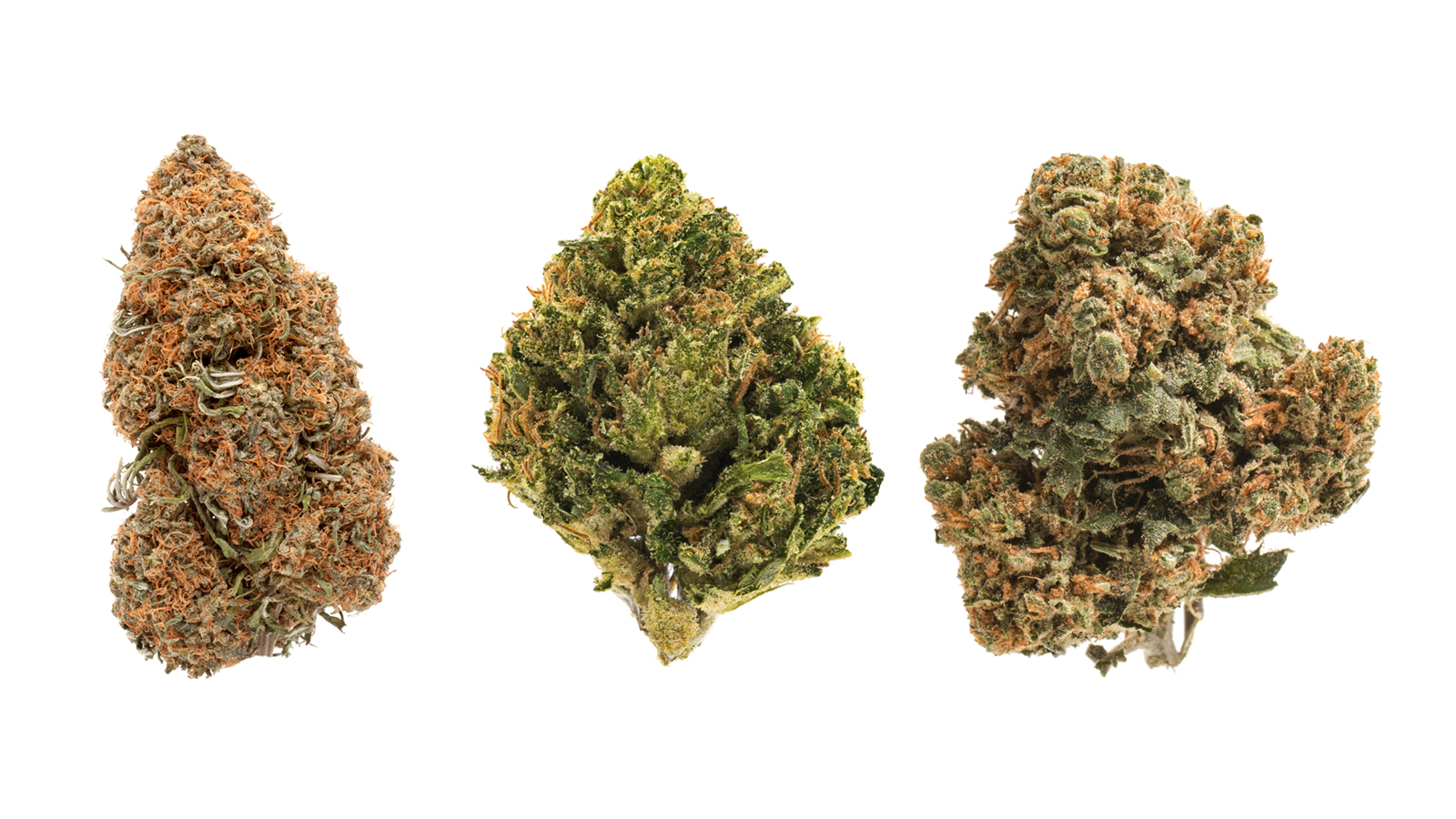 7 high-CBD cannabis strains you should know about